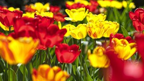 ilkbahar,çiçek,renkli
