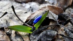 ilkbahar,çiçek,mavi
