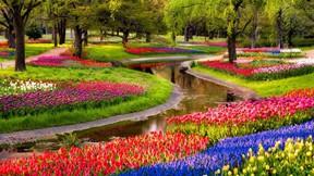 ilkbahar,çiçek,dere,ağaç