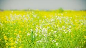 ilkbahar,çiçek,çimen