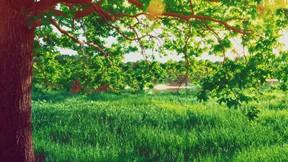 ilkbahar,doğa,ağaç,yaprak,çimen