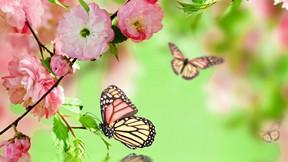 ilkbahar,çiçek,kelebek
