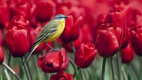 ilkbahar,gül,kuş,serçe