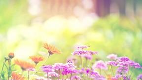 ilkbahar,çiçek,yaprak,renkli