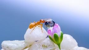 karınca,makro,damla,su