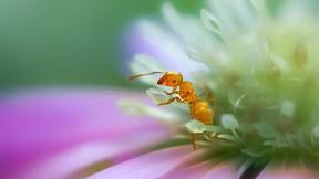 karınca,makro,çiçek