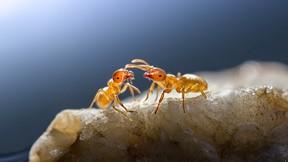 karınca,makro