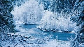 kış,kar,ağaç,orman,nehir