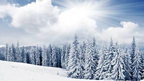kış,kar,ağaç,gökyüzü