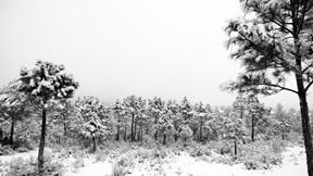 kış,kar,ağaç,orman