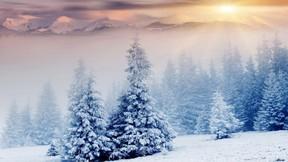 kış,orman,kar,doğa,dağ,ağaç,güneş