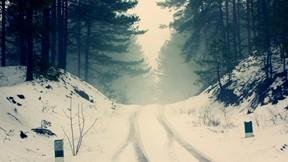 kış,kar,orman,ağaç