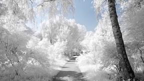 kar,kış,orman,yol,ağaç