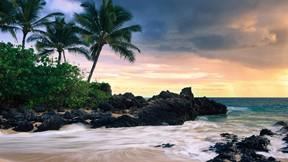 doğa,ağaç,kumsal,deniz,tropik,gökyüzü