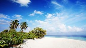 doğa,kumsal,deniz,ağaç,gökyüzü,bulut