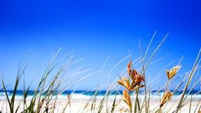 kumsal,doğa,gökyüzü,bitki