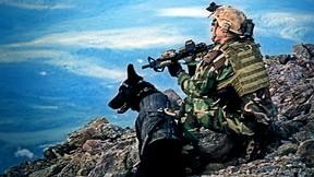 navy seal,özel kuvvet,asker,köpek