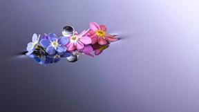 damla,su,çiçek,makro
