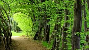yaz,ağaç,yaprak,doğa