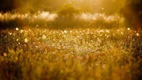 yaz,çayır,doğa