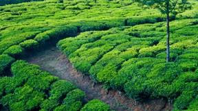 yaz,bahçe,çay