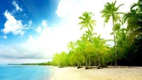 yaz,palmiye,ağaç,kumsal,doğa,deniz