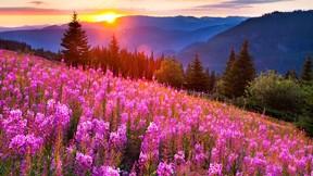 yaz,doğa,günbatımı,orman,çiçek