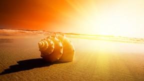 yaz,deniz kabuğu,kumsal,günbatımı