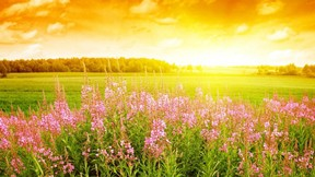 yaz,doğa,çiçek,güneş