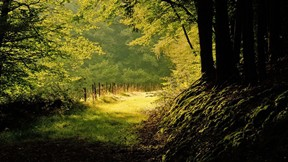 yaz,orman,ağaç,yol