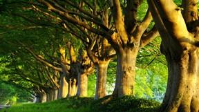 yaz,ağaç,doğa