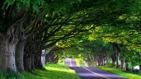 yaz,ağaç,yol