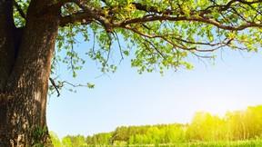 yaz,ağaç,doğa,güneş