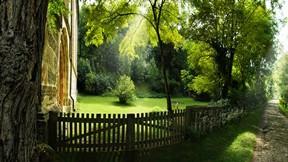 yaz,ağaç,bahçe,çit