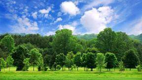 yaz,manzara,orman,ağaç,gökyüzü