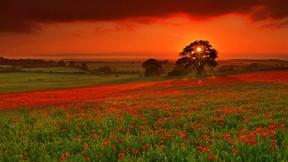 yaz,çiçek,günbatımı,ağaç