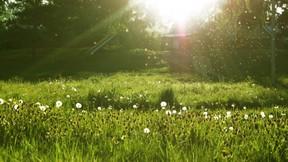 yaz,karahindiba,güneş,doğa