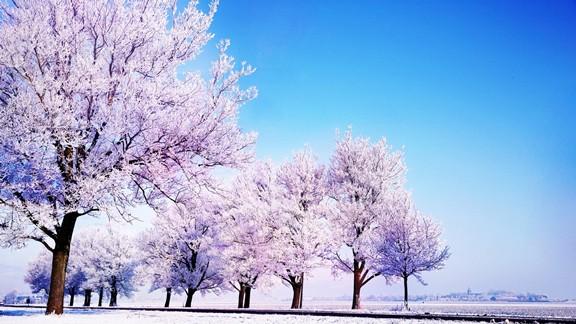 Pembe Kar