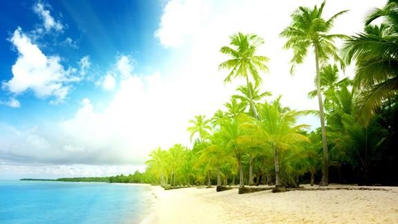 Palmiye Ağaçları