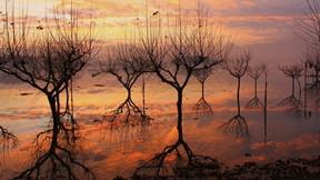 doğa,göl,ağaç