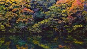 doğa,göl,yansıma,orman