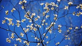 ilkbahar,çiçek,dal,gökyüzü
