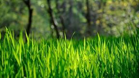 ilkbahar,çimen