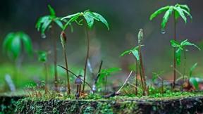 ilkbahar,bitki,yağmur