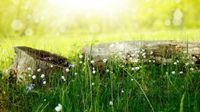 ilkbahar,bitki,yeşil,güneş