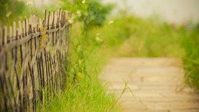 ilkbahar,yeşil,çimen,yol,çit