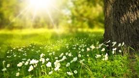 ilkbahar,çiçek,beyaz,yeşil,ağaç,güneş