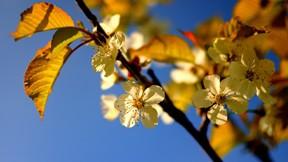 ilkbahar,çiçek,makro