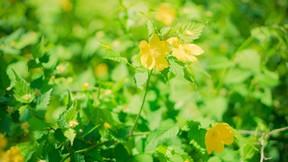 ilkbahar,bitki,yeşil
