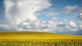 ilkbahar,manzara,sarı
